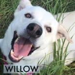 Willow 2